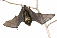 This is an image of a bat.
